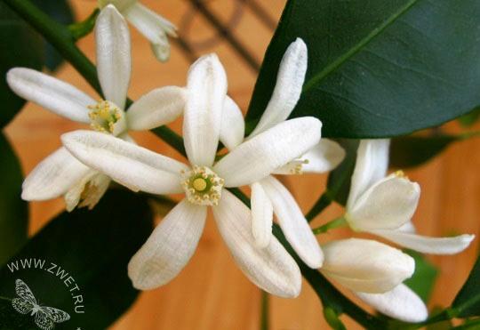 Удобрений на растения с фотографиями